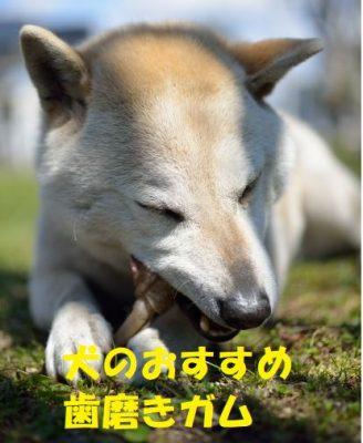 犬のおすすめ歯磨きガム