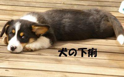 犬の下痢について
