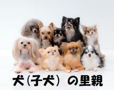 犬(子犬)の里親について