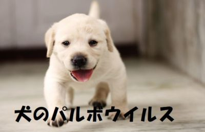 犬のパルボウイルス
