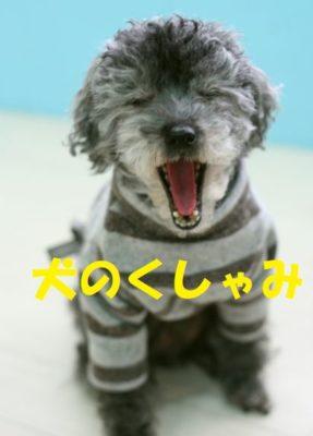 犬のくしゃみ