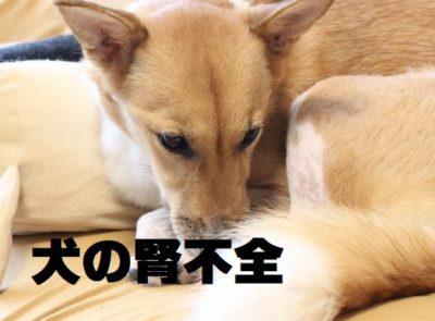 犬の腎不全