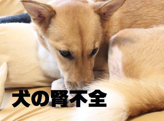 犬 腎 不全 末期 犬の腎不全の余命は?点滴治療や食事・末期症状について