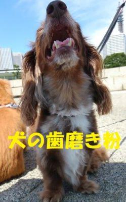 犬の歯磨き粉