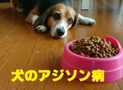犬のアジソン病について