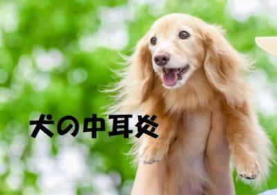 犬の中耳炎