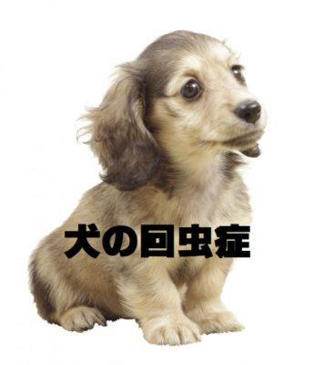 犬の回虫症