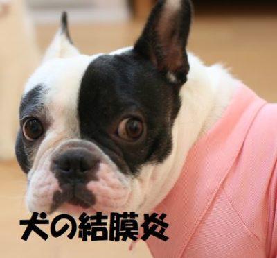 犬の結膜炎について