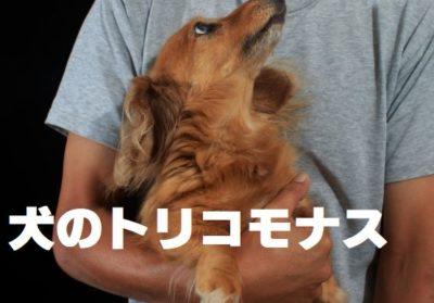 犬のトリコモナス