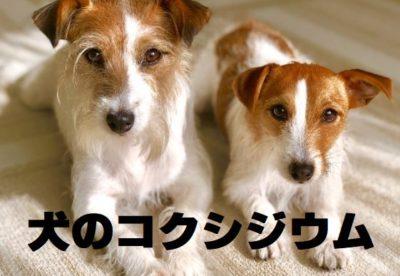 犬のコクシジウムについて