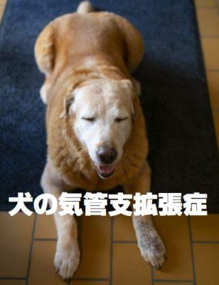 犬の気管支拡張症