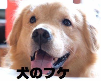 犬のフケについて
