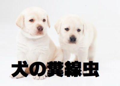 犬の糞線虫