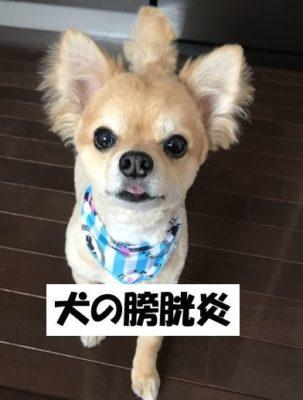 犬の膀胱炎