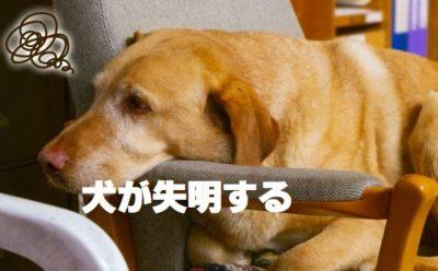 犬が失明する
