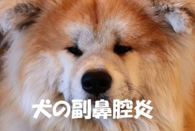 犬の副鼻腔炎とは