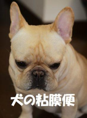 犬の粘膜便とは